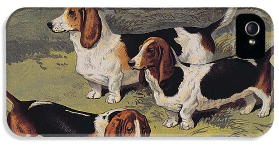 Dogs IPhone 5 Case featuring the painting Basset Hounds by English School