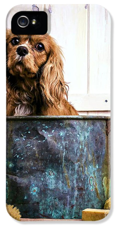 Max Dog King Charles Spaniel Pet Bath Time Sad Pet Cute Puppy IPhone 5 Case featuring the photograph Bath Time - King Charles Spaniel by Edward Fielding