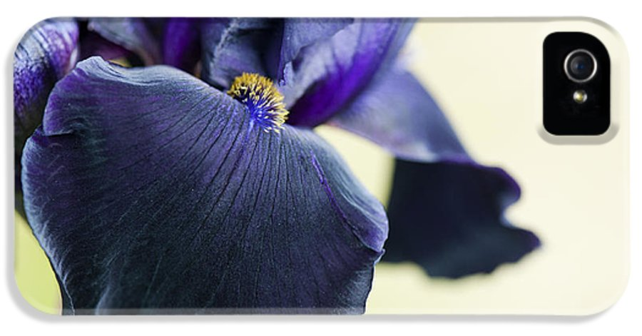 Bearded Iris IPhone 5 Case featuring the photograph Bearded Iris Interpol by Tim Gainey