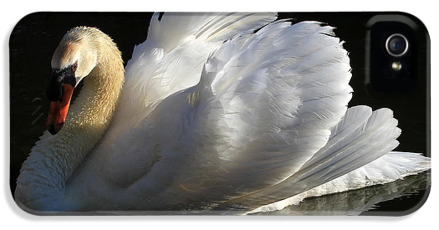 Swan IPhone 5 Case featuring the photograph Beautiful Display by Donna Kennedy