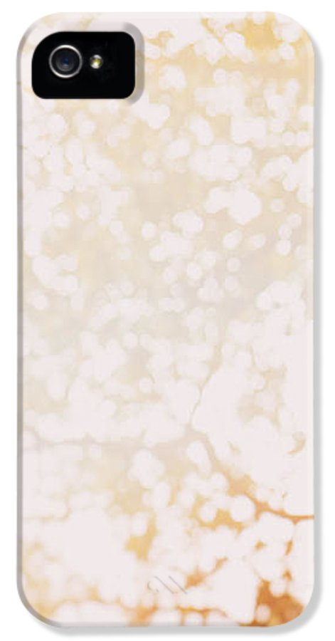 Abstract IPhone 5 Case featuring the photograph Beneath A Tree 14 4948 Triptych Set 1 Of 3 by Ulrich Schade