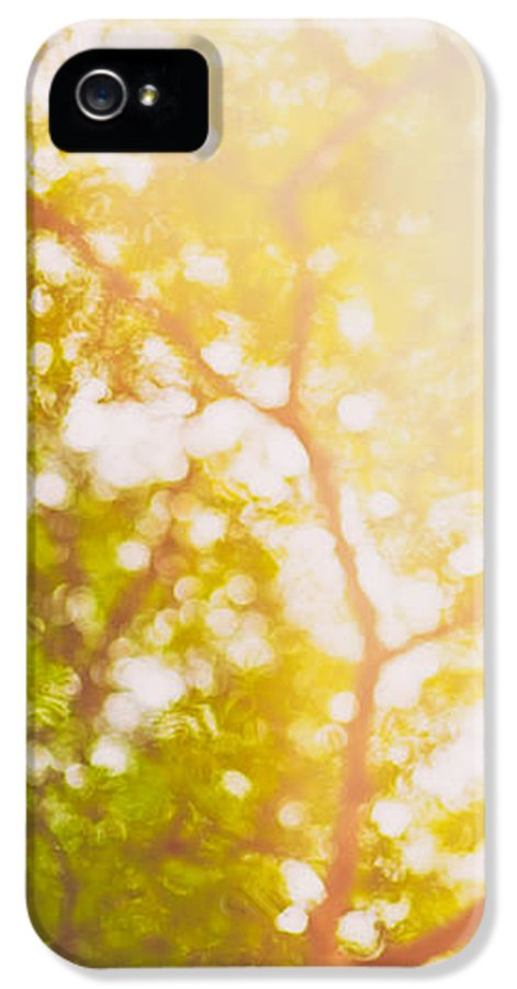 Abstract IPhone 5 Case featuring the photograph Beneath A Tree 14 5199  Diptych Set 1 Of 2 by U Schade