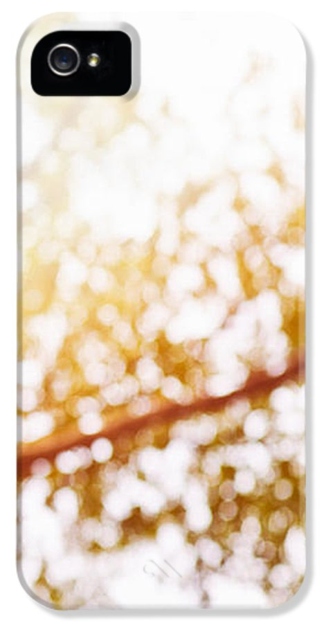 Abstract IPhone 5 Case featuring the photograph Beneath A Tree 14 5286 Triptych Set 3 Of 3 by Ulrich Schade