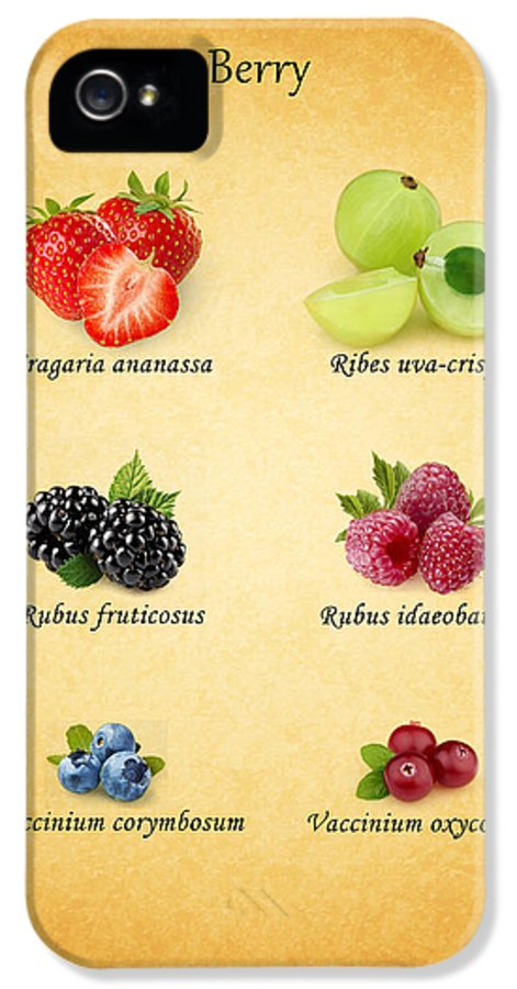 Berry IPhone 5 Case featuring the photograph Berry by Mark Rogan