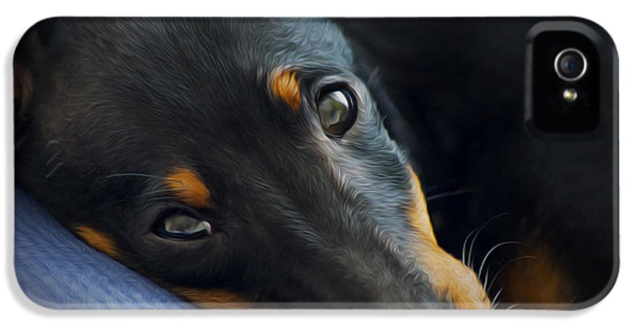 Puppy IPhone 5 Case featuring the photograph Best Friend by Aged Pixel
