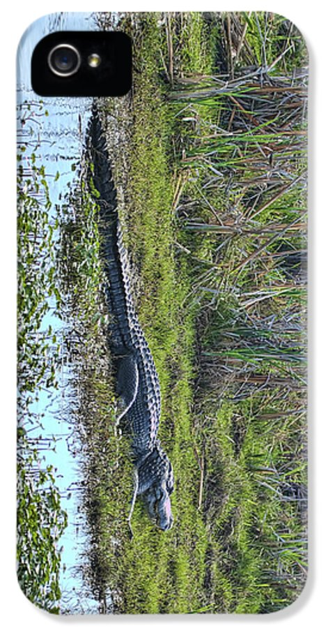 Refuge IPhone 5 Case featuring the photograph Big Old Gator by Gregory Scott