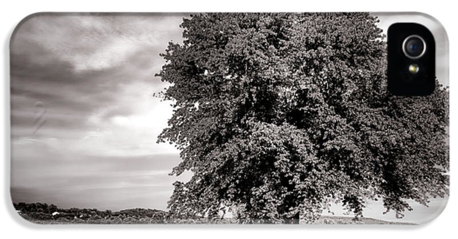 Tree IPhone 5 Case featuring the photograph Big Old Tree by Olivier Le Queinec