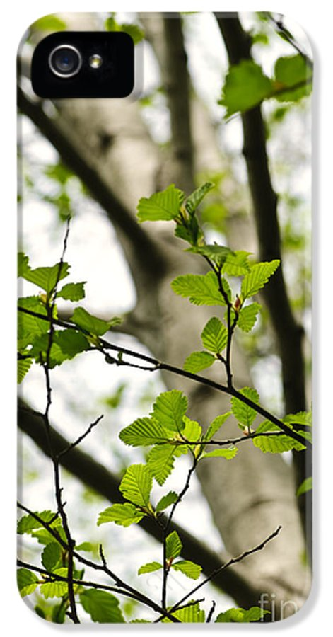 Birch IPhone 5 / 5s Case featuring the photograph Birch Tree In Spring by Elena Elisseeva