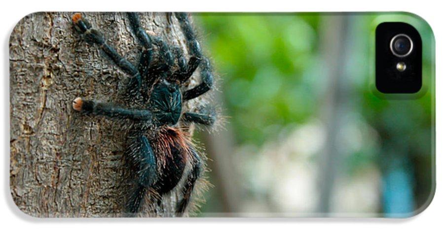 Arachnid IPhone 5 Case featuring the pyrography Bird-eater Tarantula / Tarantula Comedora De Aves by Daniel Castillo