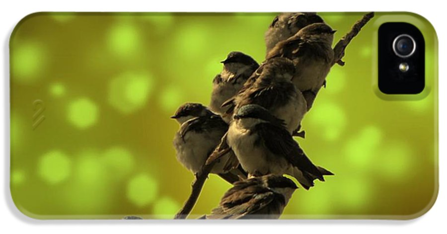 Bird IPhone 5 Case featuring the photograph Birds Of A Feather by David Dehner