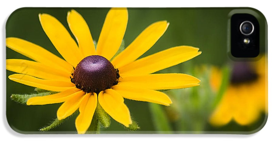 3scape Photos IPhone 5 Case featuring the photograph Black Eyed Susan by Adam Romanowicz