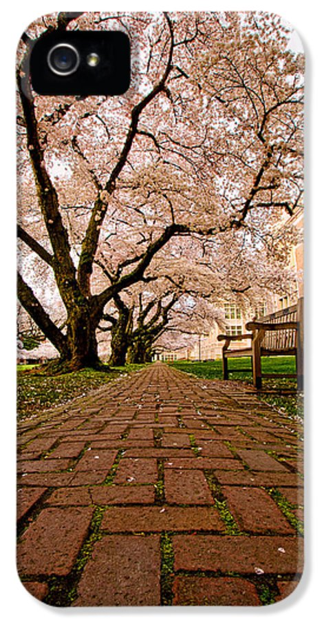 University Of Washington IPhone 5 Case featuring the photograph Blooming Giants by Dan Mihai