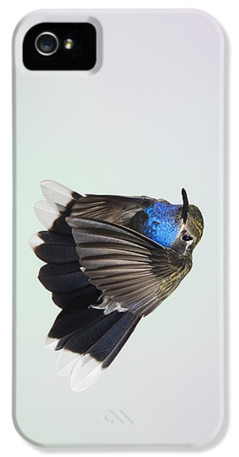 Bird IPhone 5 Case featuring the photograph Blue-throated Hummingbird - Wings Forward by Gregory Scott