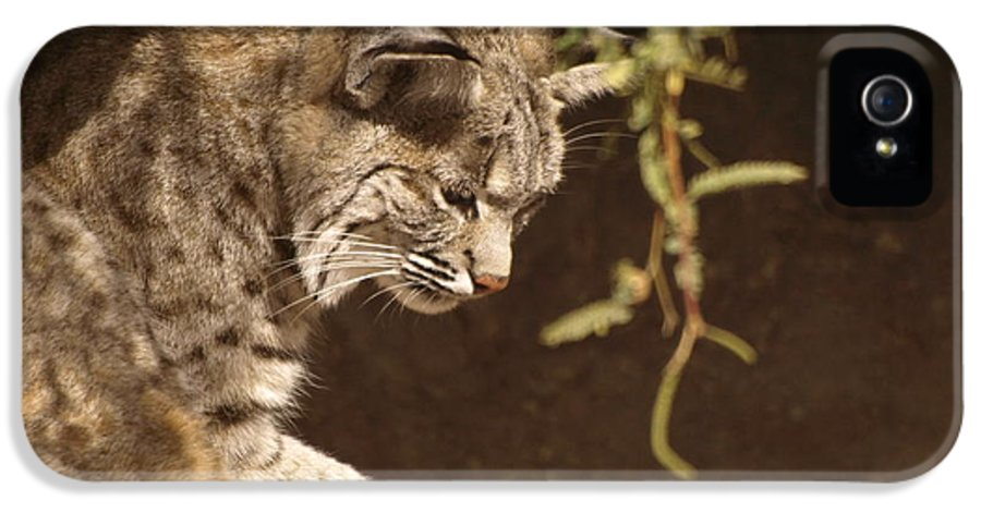 Peterson Nature Photography IPhone 5 Case featuring the photograph Bobcat by James Peterson
