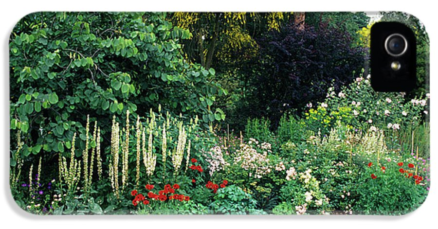 Genista Aetnensis IPhone 5 Case featuring the photograph Border At A Garden by Duncan Smith/science Photo Library