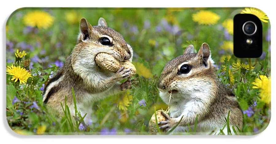 Chipmunk IPhone 5 Case featuring the photograph Bountiful Generosity by Christina Rollo