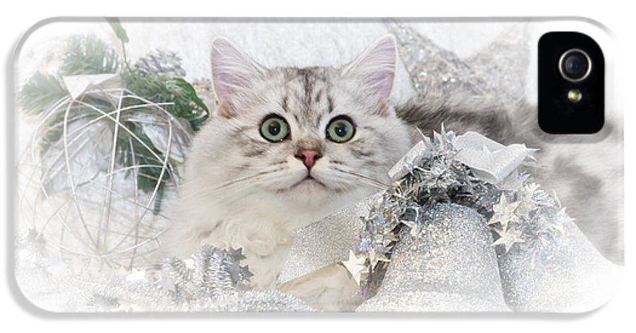 Felidae IPhone 5 Case featuring the photograph British Longhair Cat Christmas Time II by Melanie Viola