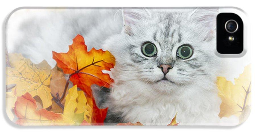 Felidae IPhone 5 Case featuring the photograph British Longhair Cat by Melanie Viola