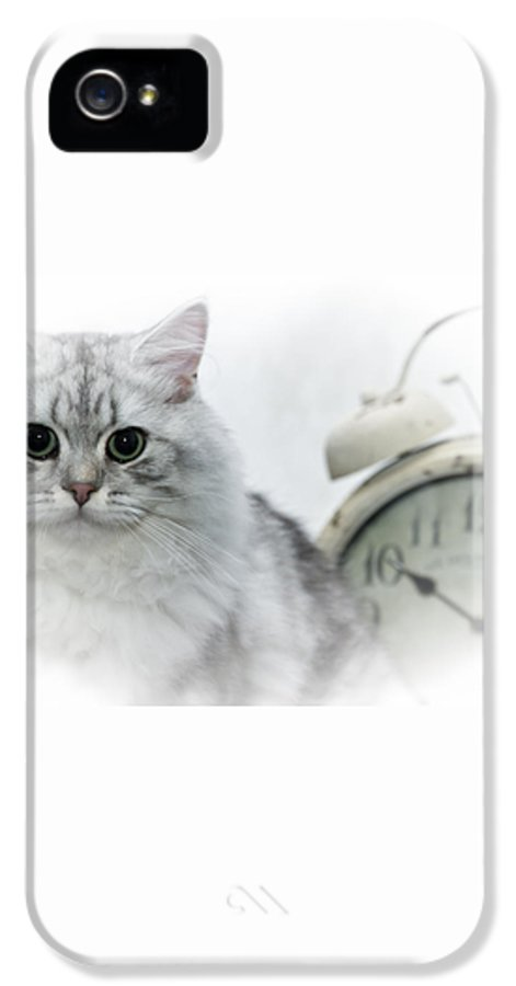 Felidae IPhone 5 Case featuring the photograph British Longhair Cat Time Goes By by Melanie Viola