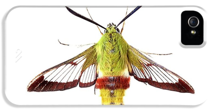 Hemaris Fuciformis IPhone 5 Case featuring the photograph Broad-bordered Bee Hawkmoth by Alex Hyde