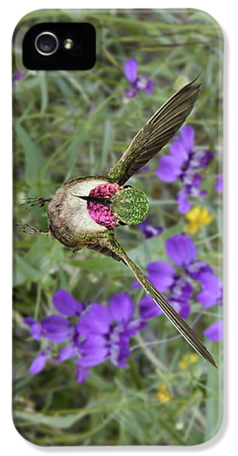Bird IPhone 5 Case featuring the photograph Broad-tailed Hummingbird - Phone Case by Gregory Scott