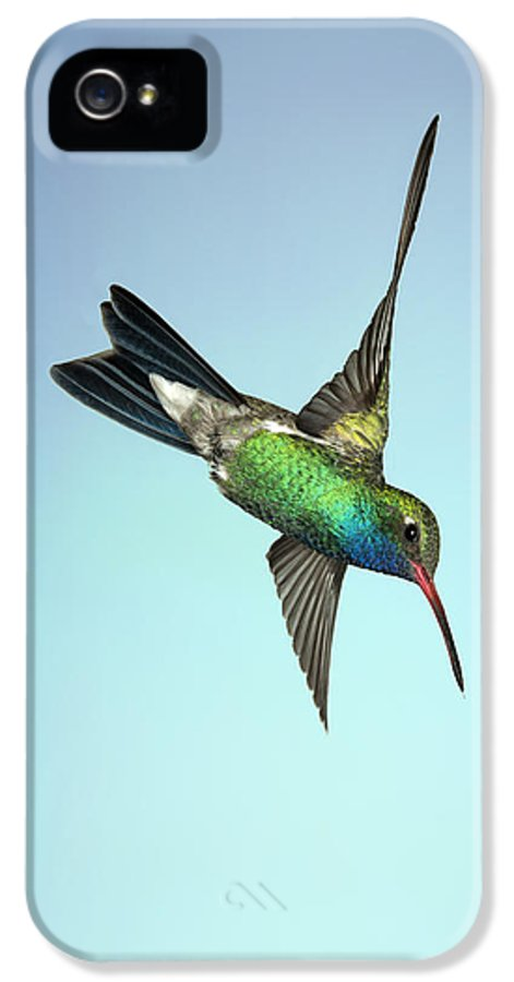 Arizona IPhone 5 Case featuring the photograph Broadbilled Hummingbird - Phone Case Design by Gregory Scott