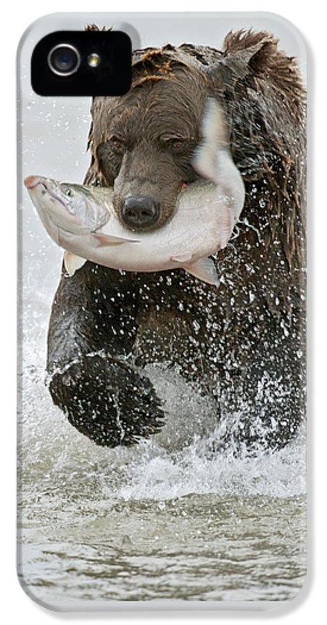 Wild IPhone 5 Case featuring the photograph Brown Bear With Salmon Catch by Gary Langley