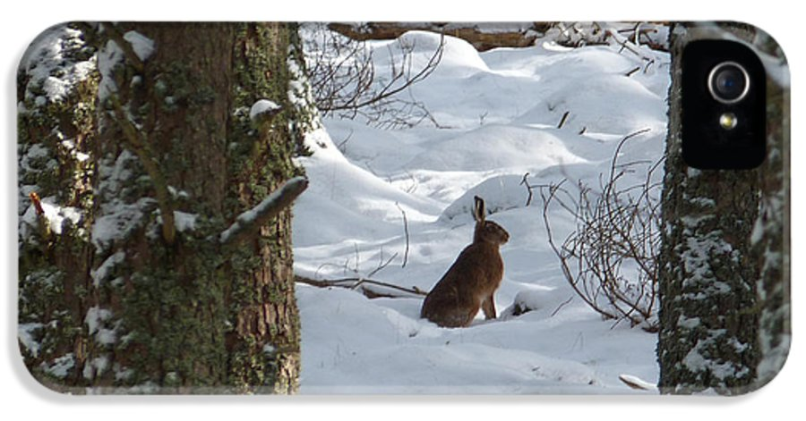 Brown Hare IPhone 5 Case featuring the photograph Brown Hare - Snow Wood by Phil Banks