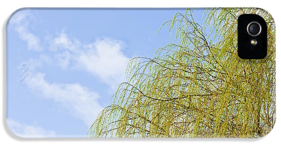 Autumn IPhone 5 Case featuring the photograph Budding Willow by Tom Gowanlock