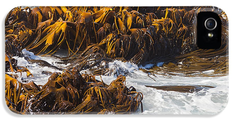 Abstract IPhone 5 Case featuring the photograph Bull Kelp Durvillaea Antarctica Blades In Surf by Stephan Pietzko