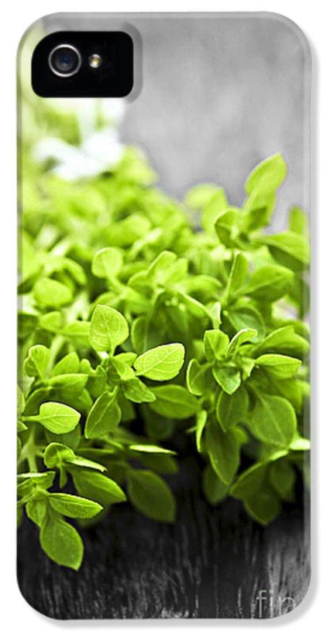 Oregano IPhone 5 Case featuring the photograph Bunch Of Fresh Oregano by Elena Elisseeva