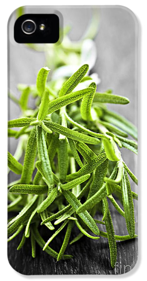 Rosemary IPhone 5 Case featuring the photograph Bunch Of Fresh Rosemary by Elena Elisseeva