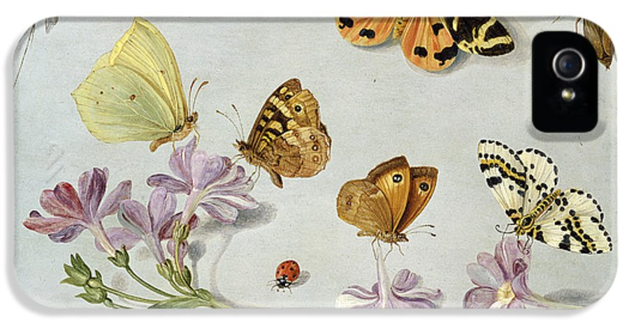 Still Life IPhone 5 Case featuring the painting Butterflies by Jan Van Kessel