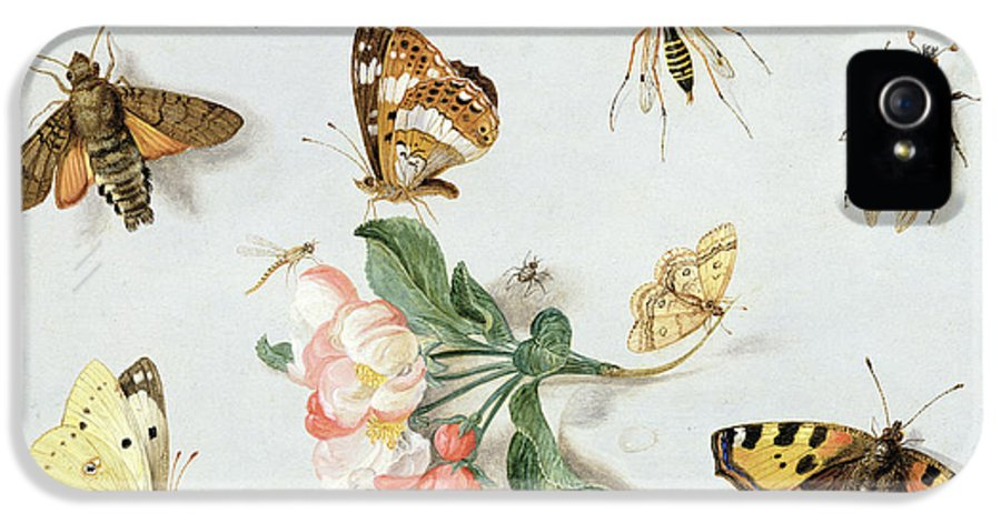 Butterfly IPhone 5 Case featuring the painting Butterflies Moths And Other Insects With A Sprig Of Apple Blossom by Jan Van Kessel