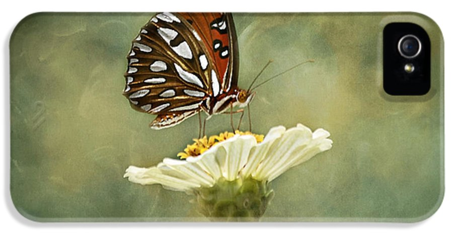 Butterfly IPhone 5 Case featuring the photograph Butterfly Dreams by Kim Hojnacki