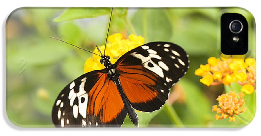 2012 IPhone 5 Case featuring the photograph Butterfly Wings by Anne Gilbert