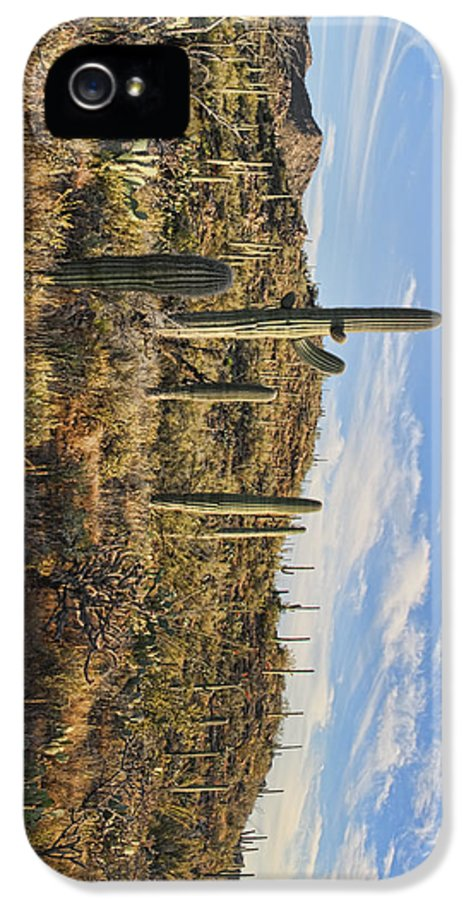 Arizona IPhone 5 Case featuring the photograph Cacti In Saguaro Natl Park - Phone Case by Gregory Scott
