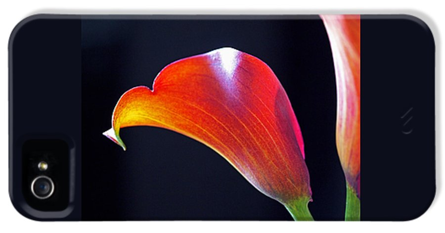 Lily IPhone 5 Case featuring the photograph Calla Colors And Curves by Rona Black