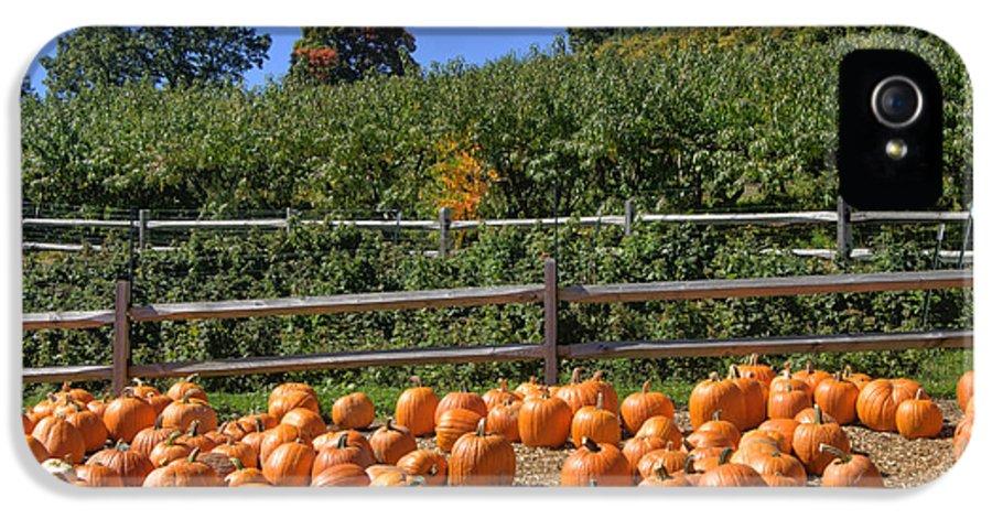 Pumpkin IPhone 5 Case featuring the photograph Calling Autumn by Joann Vitali