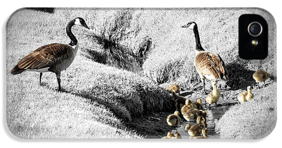 Goose IPhone 5 Case featuring the photograph Canada Geese Family by Elena Elisseeva