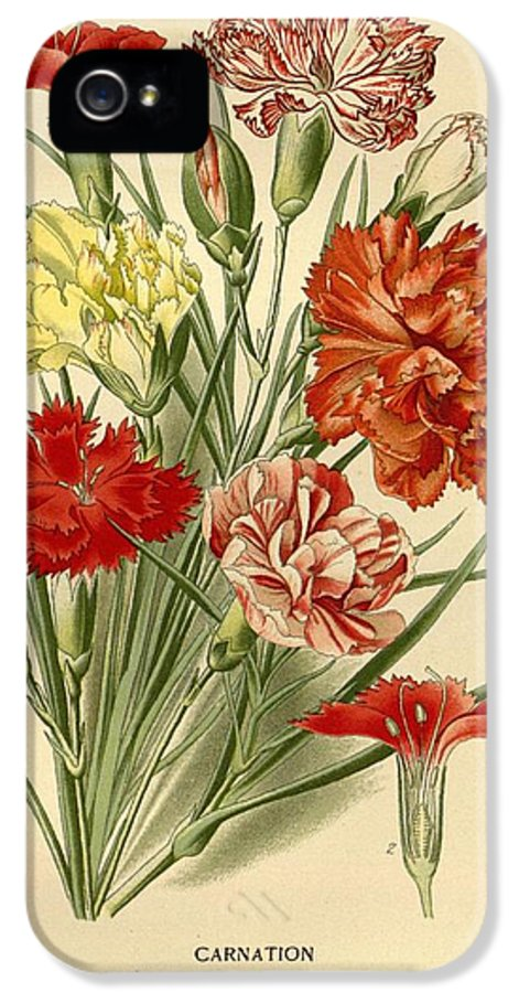 Carnations IPhone 5 Case featuring the painting Carnations by Philip Ralley