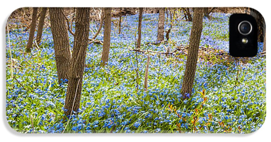 Flowers IPhone 5 Case featuring the photograph Carpet Of Blue Flowers In Spring Forest by Elena Elisseeva