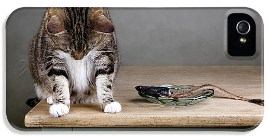 Cat IPhone 5 Case featuring the photograph Caught In The Act by Nailia Schwarz
