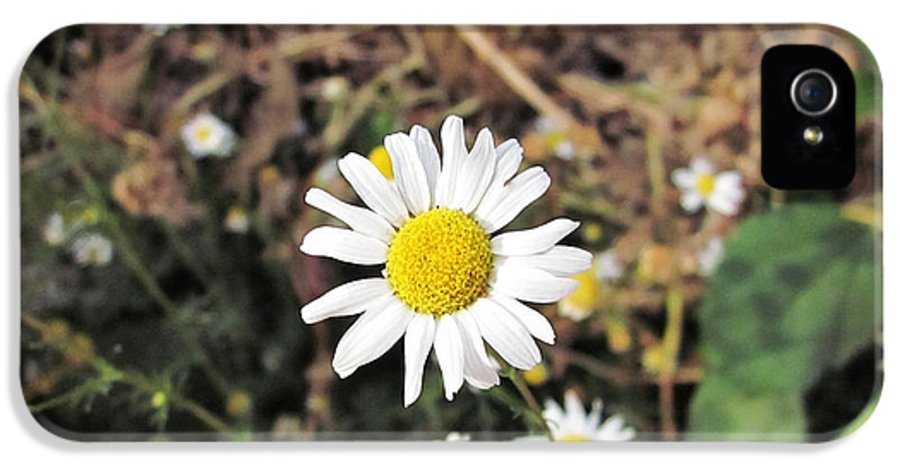 Chamomile IPhone 5 Case featuring the photograph Chamomile In The Garden by Marina Logonova