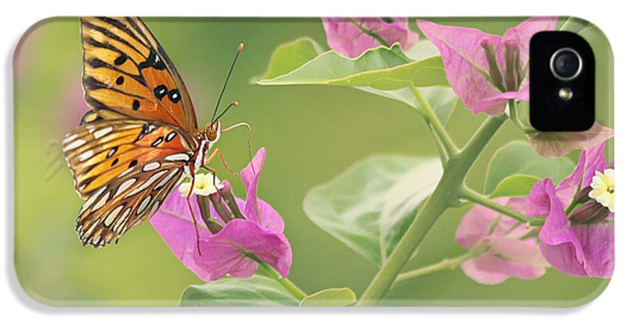 Butterfly IPhone 5 Case featuring the photograph Chance Encounter by Kim Hojnacki