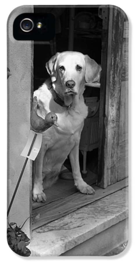 Dog IPhone 5 Case featuring the photograph Charleston Shop Dog In Black And White by Suzanne Gaff