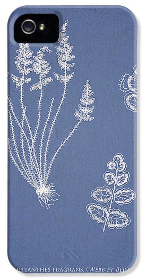 Fern IPhone 5 Case featuring the drawing Cheilanthes Fragrans by Aged Pixel