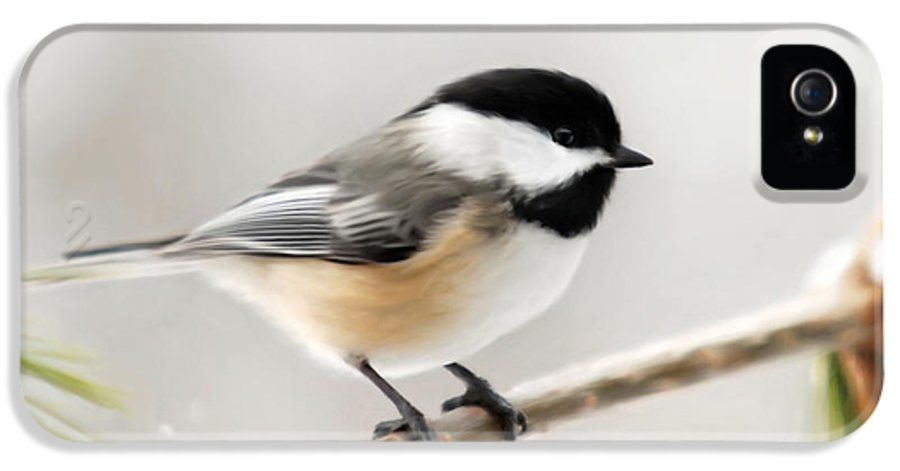 Chickadee IPhone 5 Case featuring the mixed media Chickadee by Christina Rollo