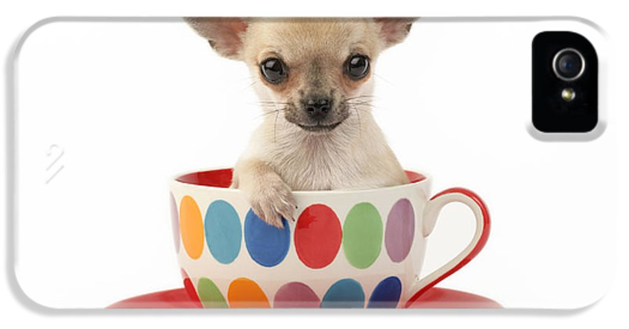 Chihuahua IPhone 5 Case featuring the digital art Chihuahua In Cup Dp684 by Greg Cuddiford