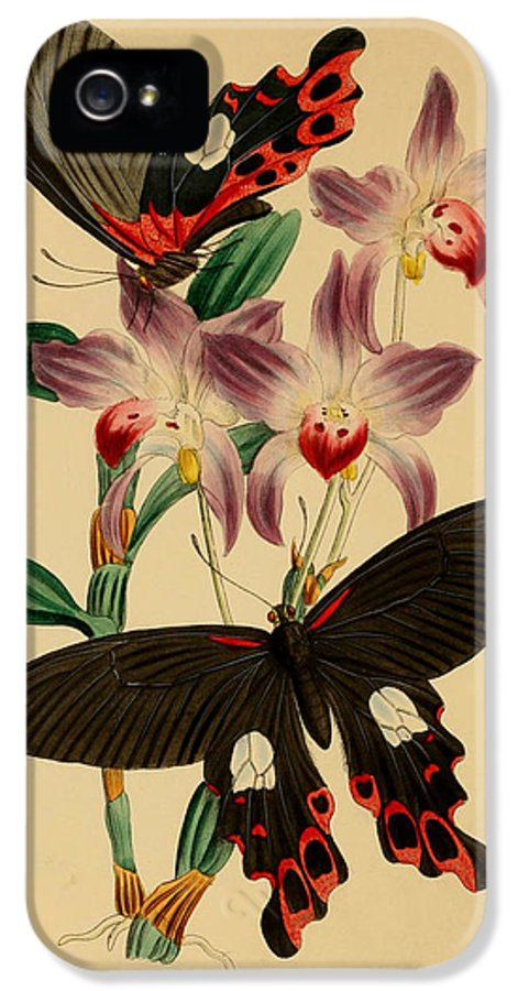 Butterflies IPhone 5 Case featuring the painting Chinese Butterflies by Philip Ralley